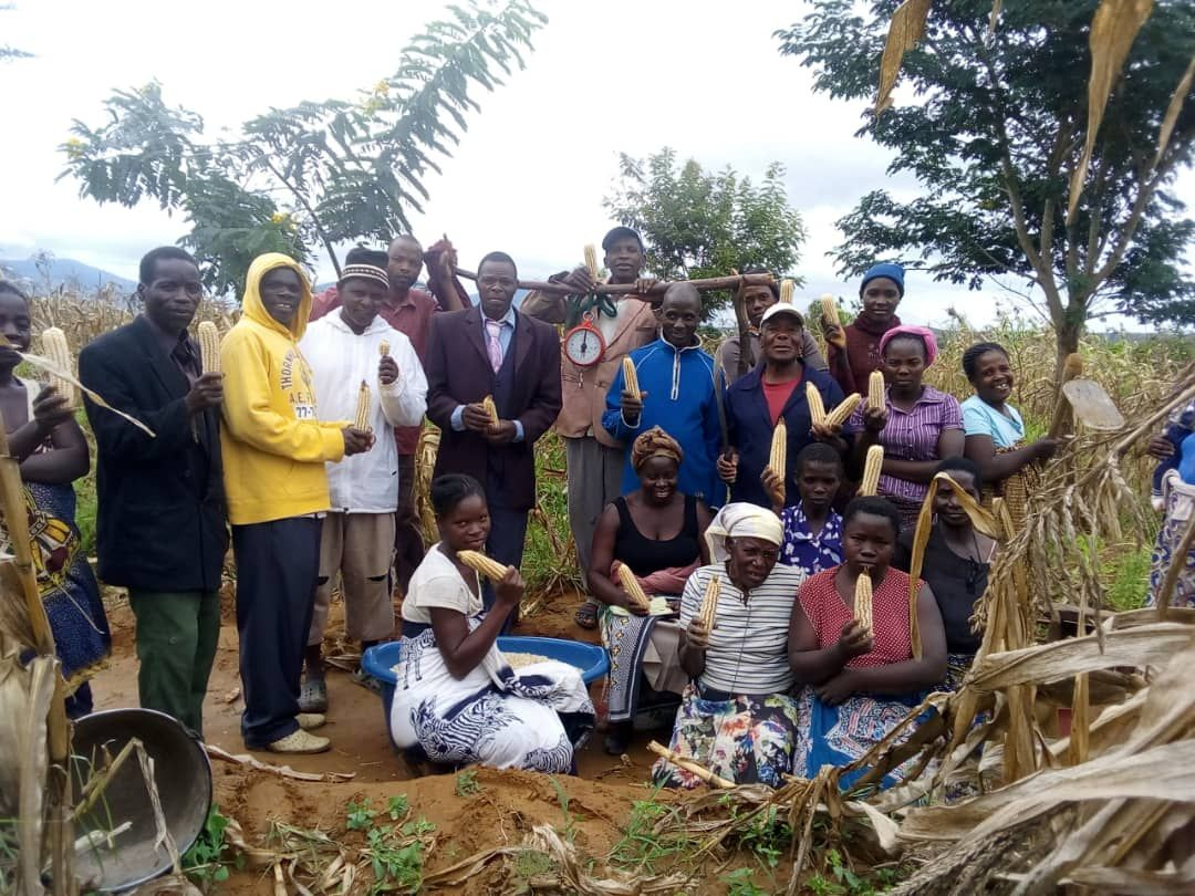 group madisi harvest april 2019